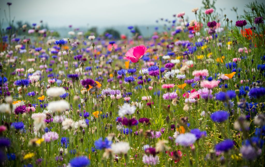 The colors man. Wildflower explosion in Washington state.